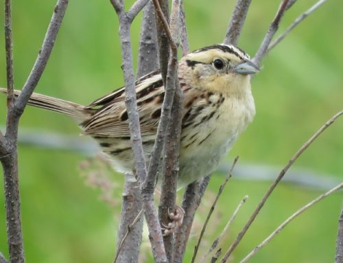 Brainerd Bird Report: July 18, 2019
