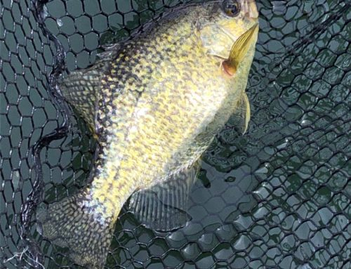 Brainerd Fishing Report: September 25, 2019