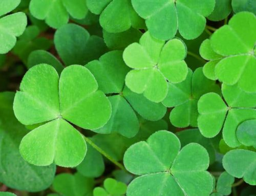 St. Patrick's Day Events in Brainerd, MN